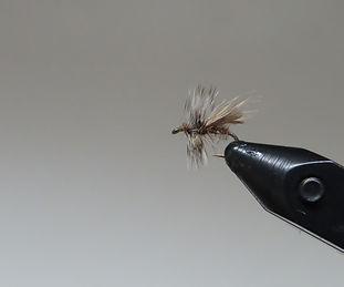 skittering-caddis-fly-hatch-chart.jpg