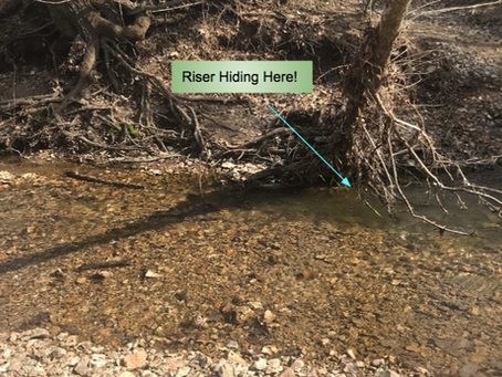 Casting for tricky Trout
