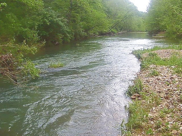 Dry Fly Fishing Quick Tips: Take it to the bank