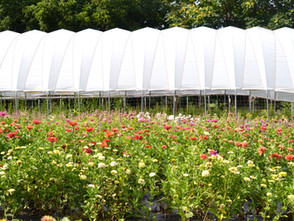 So, You Want To Start A Flower Farm?