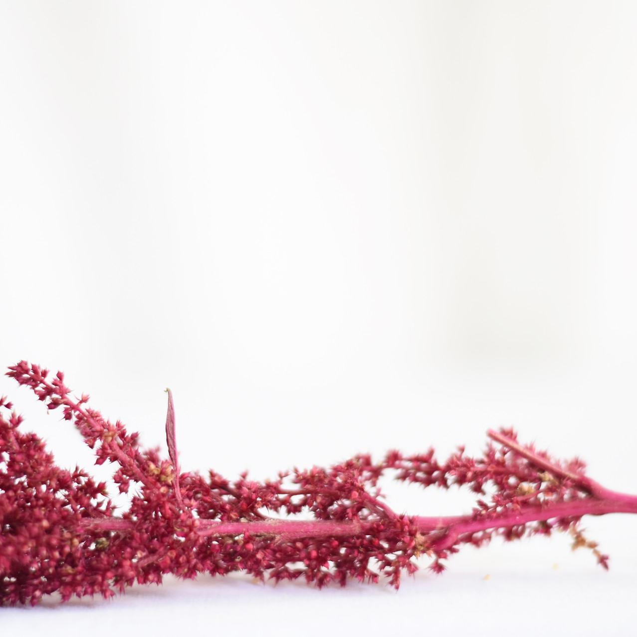 Velvet Curtains Amaranthus