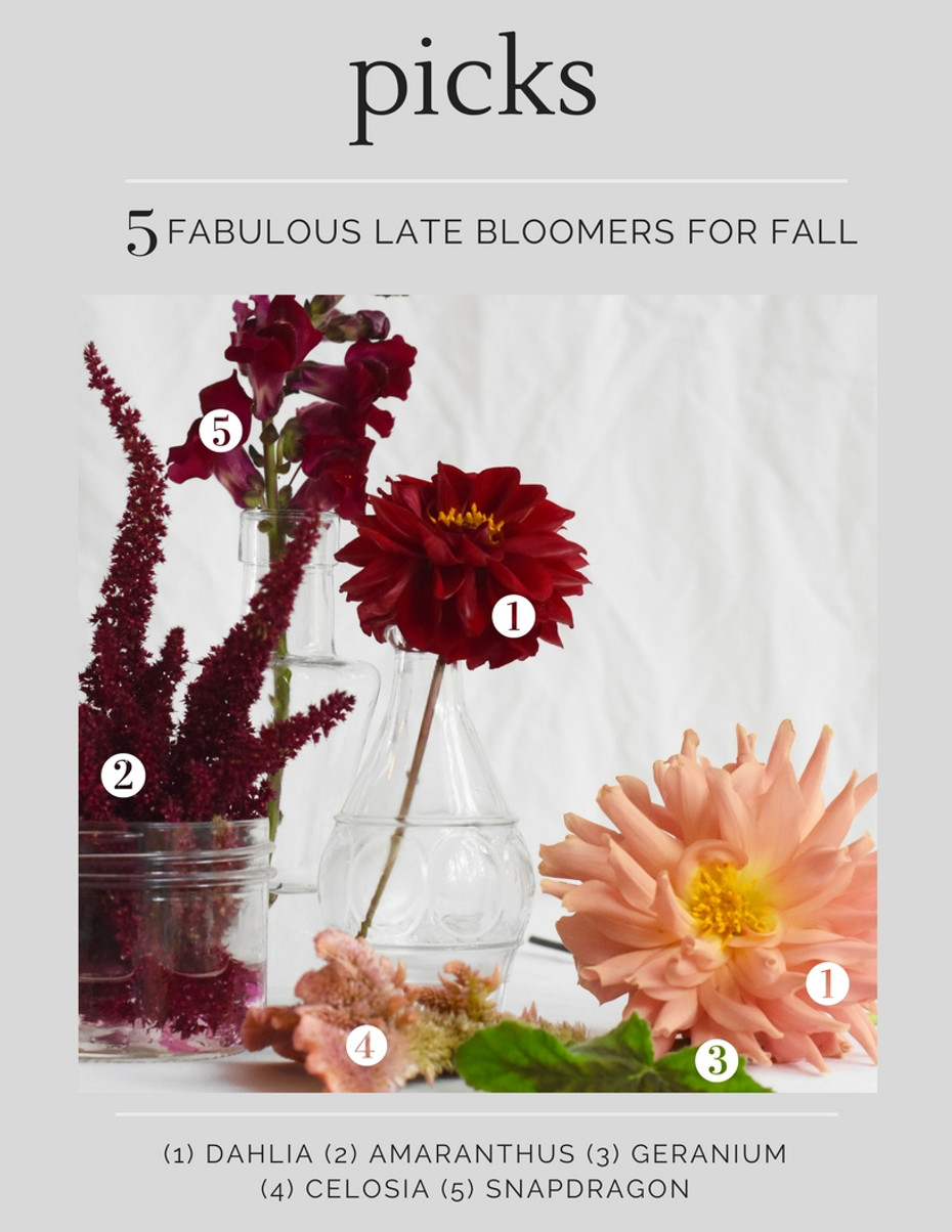 Our Fave Fall Cutting Flowers