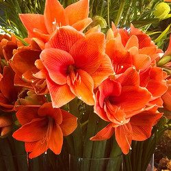 What do you call a bunch of flowers_ A p