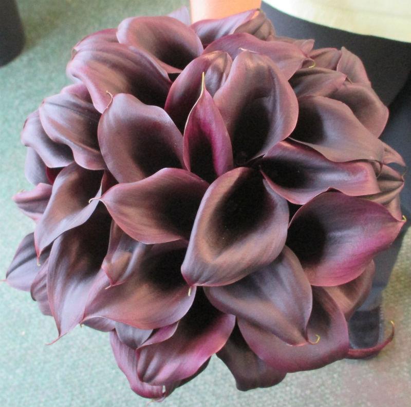 Schwartz Calla Lilies