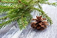 Pixabay_christmas-3868588.jpg