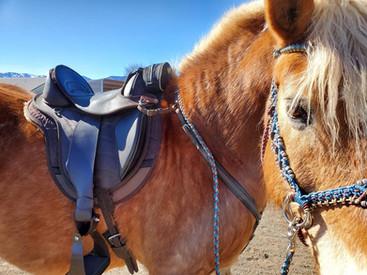 EDIX Endurance Treeless Saddle