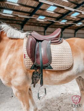 Brown Treeless Dressage Saddle