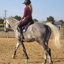 EDIX Alydar Treeless Jumping Saddle