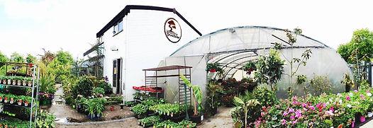 jardinerie orvault, jardinerie orvaltaise, jardinerie nantes, bonsai, bonsai nantes