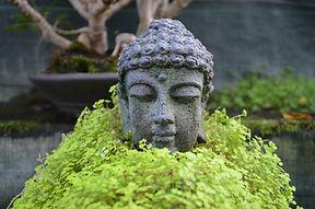 jardinerie orvault, jardinerie orvaltaise, jardinerie nantes, bonsai nantes, bonsai