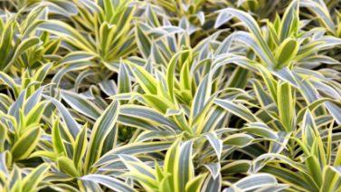 Plantes d'intérieur variées