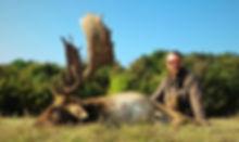 big fallow buck trophy