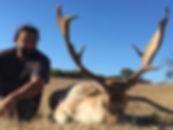 Fallow deer shot by hunter