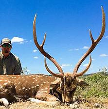 Hunt chital axis deer Australia