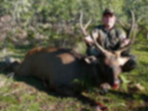 Steve's big sambar deer