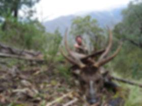 Sambar deer outfitter Australia