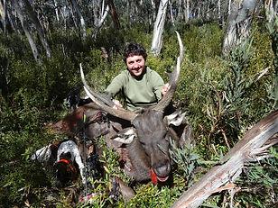 Deerdog bow samba.JPG