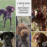 Training a deer dog needs to consider individual dog differrences