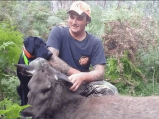 Deer hunting with dogs – help or hindrance?