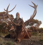 hunt red deer Australia