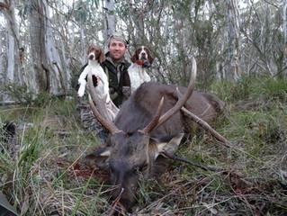 Training a Deer Dog for Sambar Deer