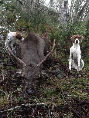 22 inch deer.JPG