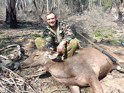 Sambar deer hunting Victoria