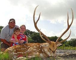 Axis deer hunting safari