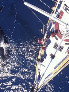 Kiwi Whale Watching