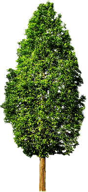 Tree With No White.fw.png