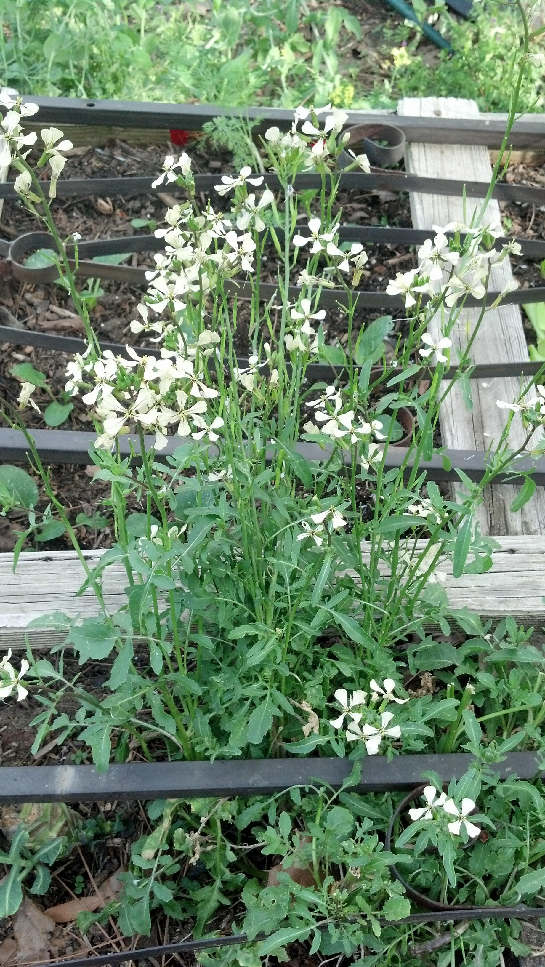 Flowering ?