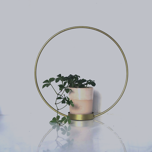 Gold plant ring with pot/plant