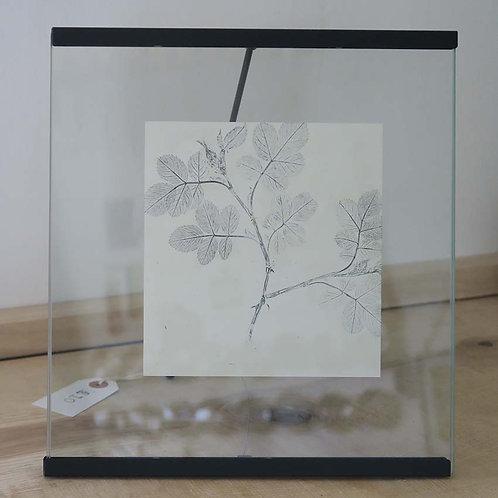 Roseship leaf print