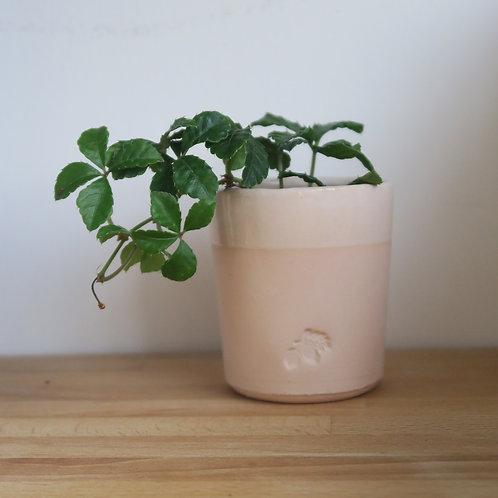 Good Soil terracotta pot with plant