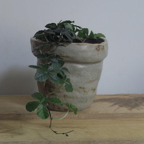 Hand built ceramic pot