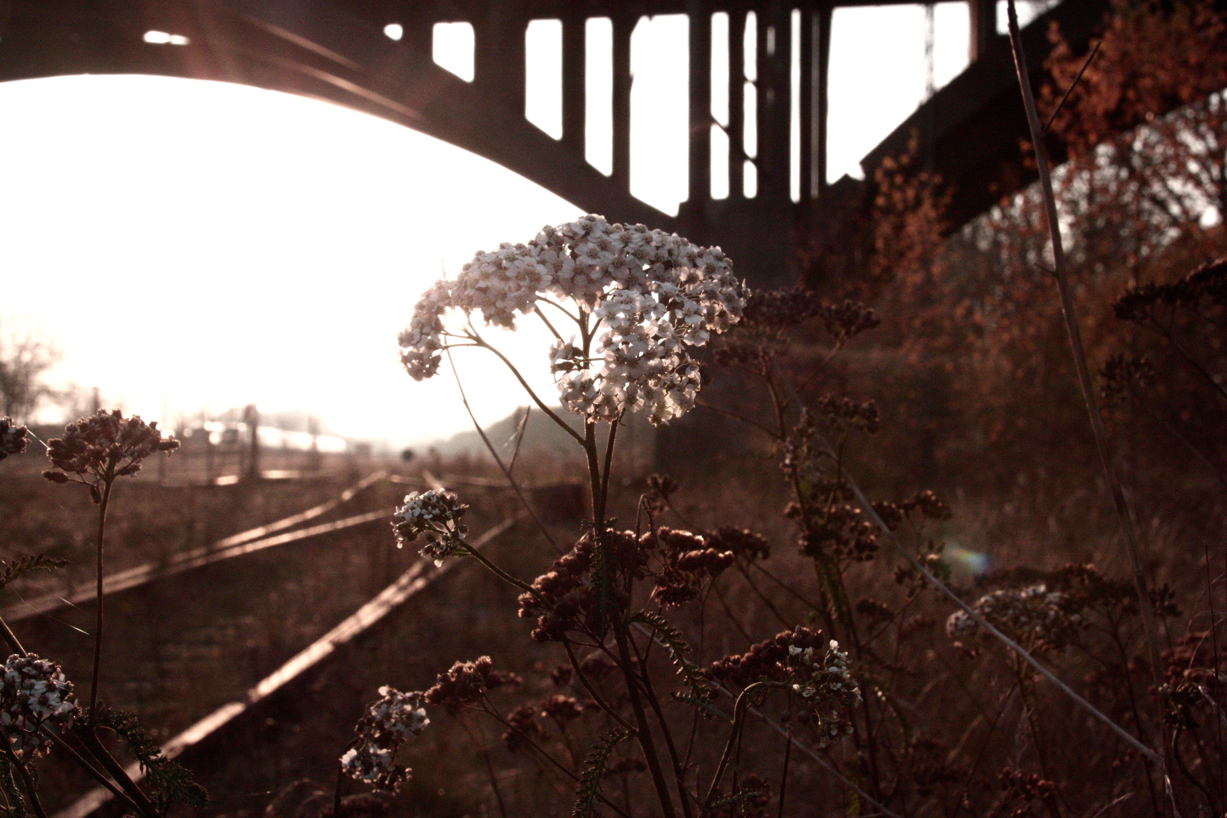 Railway flowers, Aarhus