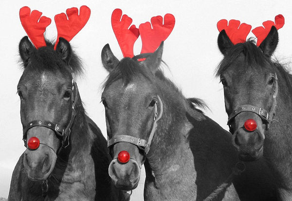 Christmas-Horse-Camp.jpg