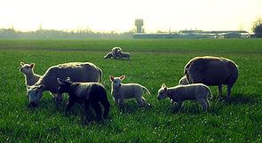 Boerderij Postma-Kroodsma, zorgboerderij Dokkum, dagbesteding Dokkum, schapen