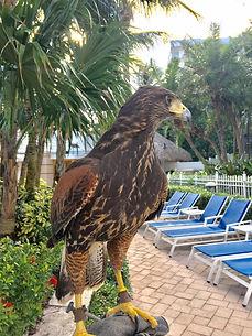 Bird removal in Miami