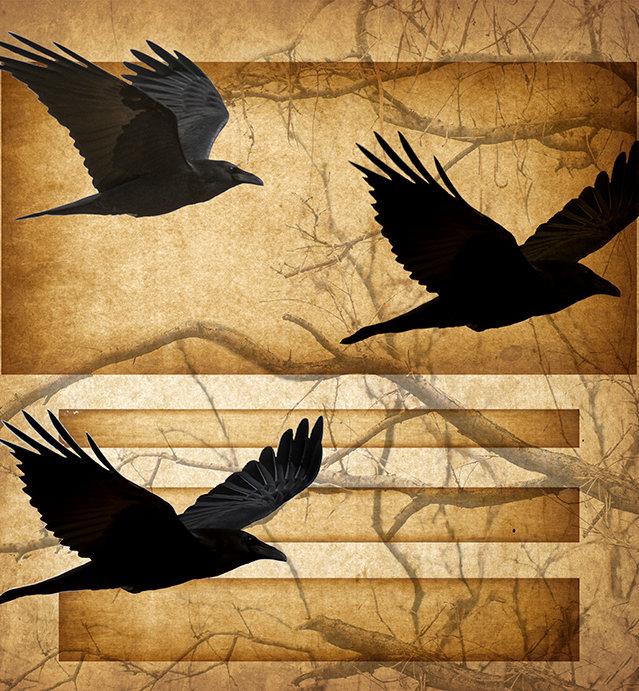 3 ravens in flight_FLAT for homepage.jpg