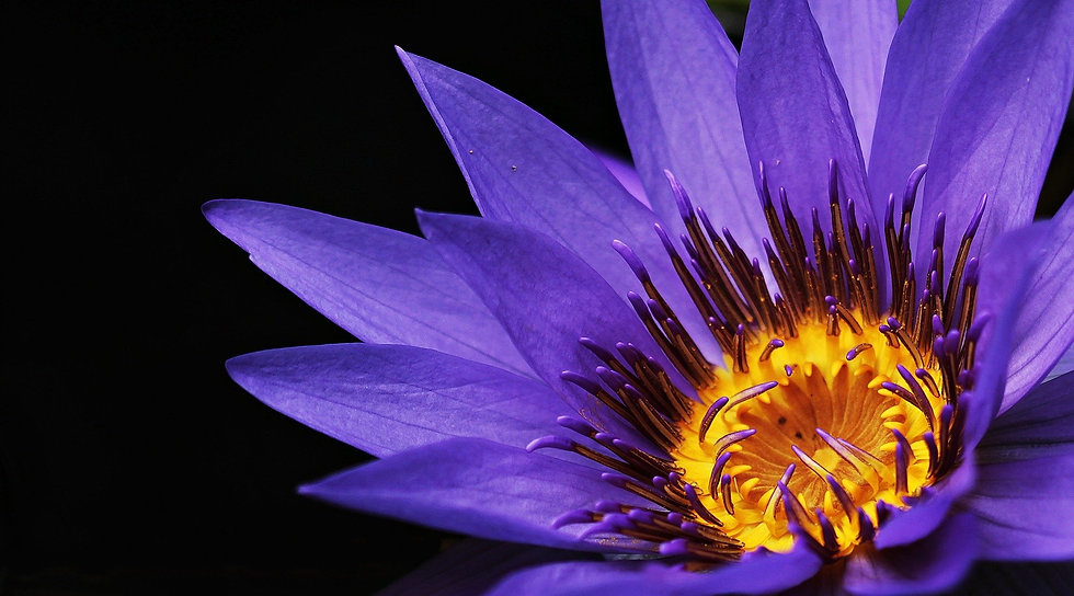 water-lily-2334209_1920.jpg
