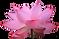 Kriyayoga Lotus