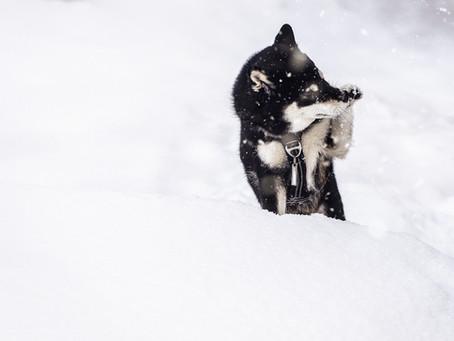 Pourquoi j'aime tant photographier les chiens