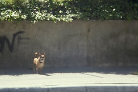 A DOG.jpg
