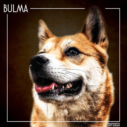 Bulma portrait.jpg