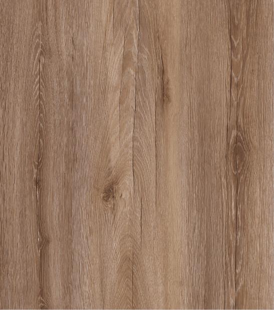 carvalho-europeo