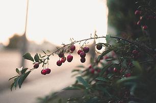 Tyler Praymayer - Summer 2017 Cherries.j