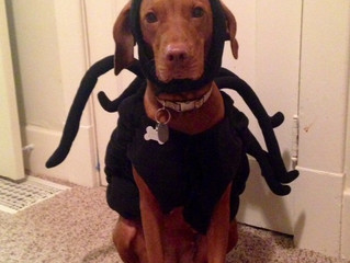 Happy Howl'o'ween!