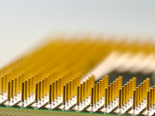 Microchips need contact info