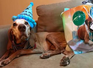 Happy 16th Barkday!